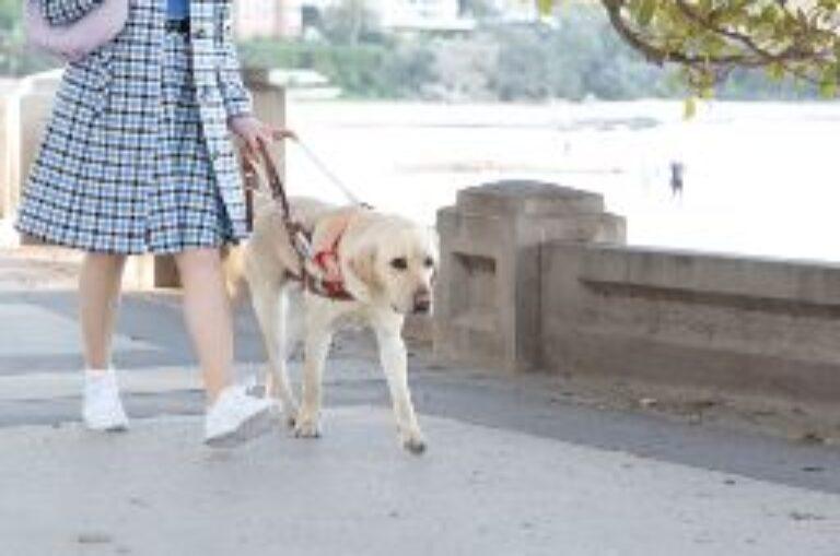 International Guide Dog Day 2020!