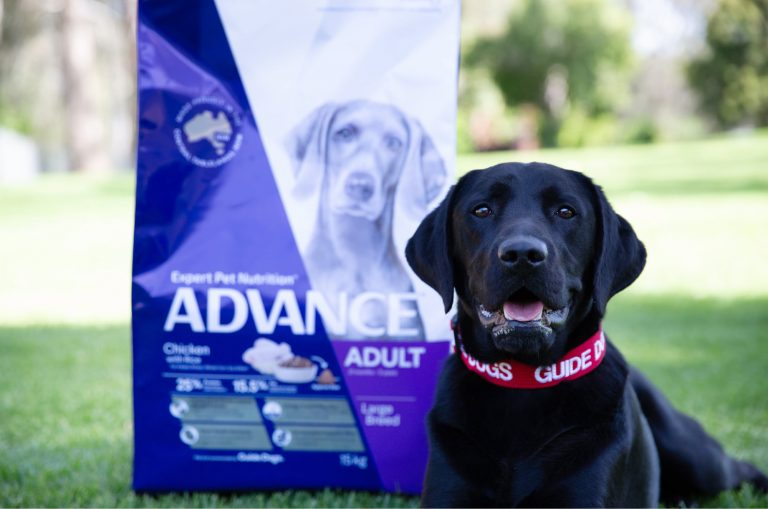 A black labrador dog is seated next to a large bag of dog food. The dog is looking at the camera.